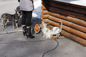 Cats and dogs are waiting when they are being fed — Stock Photo