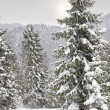 Winter forest in the Carpathian Mountains — 图库照片