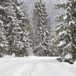 Winter forest in the Carpathian Mountains — Stock Photo