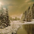 Winter forest in Carpathians — Stockfoto #43819539