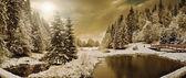 Winter forest in Carpathians — Stock fotografie