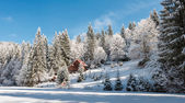 Winter forest in Carpathians — Stock Photo