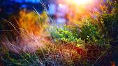 Makro trawa — Zdjęcie stockowe
