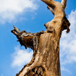 Aging Tree — Stock Photo