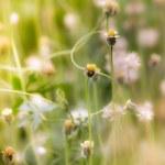 petites fleurs dans un champ — Photo