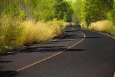 En väg till skogen — Stockfoto