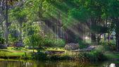 Alberi di banyan in un parco — Foto Stock