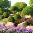 Shrub garden — Stock Photo