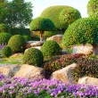 Stock Photo: Shrub garden