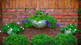 Flowers on a Brick Wall — Stock Photo