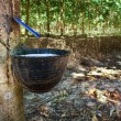 Rubber Tapping — Stock Photo