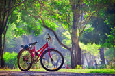 Bicycle in the Park — Stock Photo