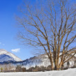 Cherry Blossom - Sakura tree in Winter at Shirakawago — Stock Photo