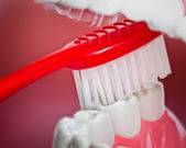 Close up of a tooth brush with teeth and gum model — Stock Photo