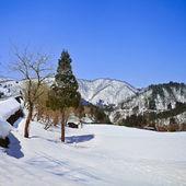 Pine Wood on a Snow Landscape — Stock Photo