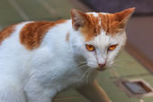 日本街头猫在长崎 — 图库照片