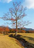 Autumn Laves at Nara Park in Nara — Stock Photo