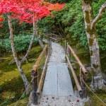 Chisen-kaiyushiki, Pond-stroll garden in Ginkaku-ji temple in Kyoto — Stock Photo #42042285