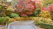 Autumn Leaves Garden — Stock Photo