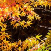 Gele maple laat in de herfst — Stockfoto
