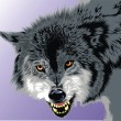 Gray wolf - Stock Vector