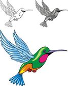 Illustrated hummingbird — Stock Vector