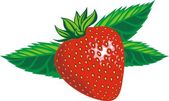 Fresh strawberry — Stock Vector