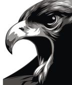 Head of eagle in black and white — Stock Vector
