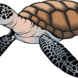 Stock Vector: Small turtle
