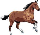 Bonito caballo — Vector de stock