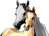 Schöne pferde — Stockvektor