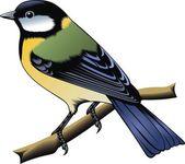 Colorful bird — Stock Vector