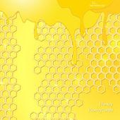 Honing, honingraat — Stockvector