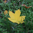 Autumn, leaves, grass — Stock Photo