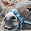Donkey — Stock Photo #34301205