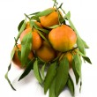 Bunch of Mandarins — Stock Photo