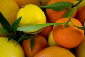 Citric close up — Stock Photo