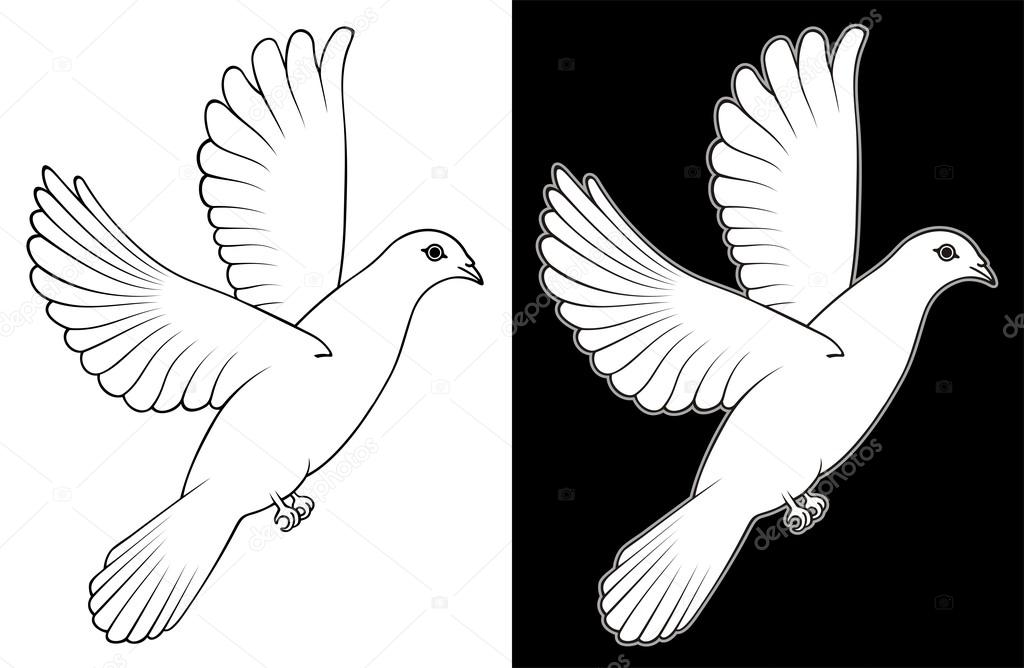 White Doves Drawings Black Drawing Sketch White