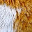The cat's fur — Stock Photo
