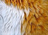 The cat's fur — Stock Photo