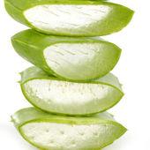 Green leaf of aloe — Stock Photo