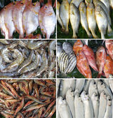 Different seafood — Stock Photo