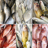 Different sea fish — Stock Photo