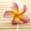 Frangipani flowers  — Stock Photo