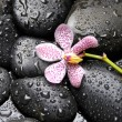 Stock Photo: Orchid and zen stones