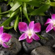 Orchid and zen stones bamboo leaves — Stock Photo