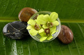 Orchids and therapy stones — Stock Photo
