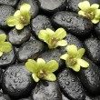 Stock Photo: Orchid on the black zen stones