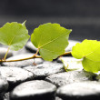 Green ivy on pebble — Stock Photo