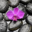 Stones with green plant and orchid — Stock Photo